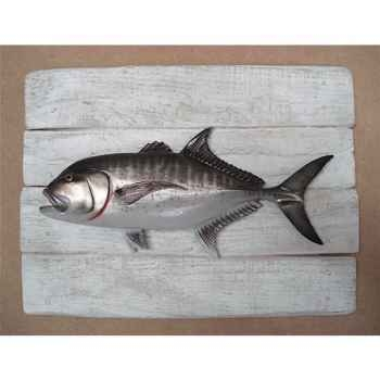 Cadre poisson des tropiques Cap Vert Carangue ignobilis -CADR32