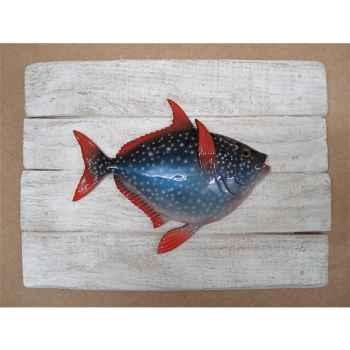 Cadre poisson des tropiques Cap Vert Opah -CADR38