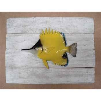 Cadre poisson des tropiques Cap Vert Poisson pincette -CADR39