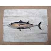 cadre poisson des tropiques cap vert thon rouge cadr40