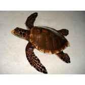 grande sculpture relief cap vert tortue marine gsr006
