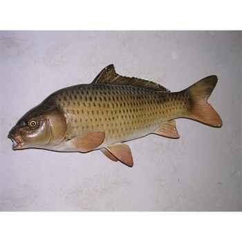 Trophée poisson d\'eau douce Cap Vert Carpe commune -TR06