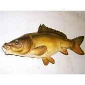 trophee poisson d eau douce cap vert carpe miroir tr07
