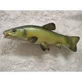 trophee poisson d eau douce cap vert tanche tr10