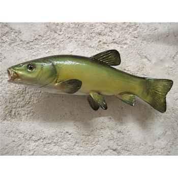 Trophée poisson d\'eau douce Cap Vert Tanche -TR10