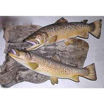 Trophée poisson d\'eau douce Cap Vert Truite fario femelle -TR16