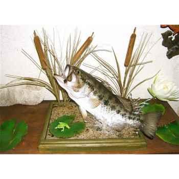Trophée poisson d\'eau douce Cap Vert Black bass -TRDF01