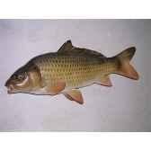 trophee poisson d eau douce cap vert carpe commune trdf06