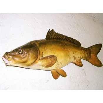 Trophée poisson d\'eau douce Cap Vert Carpe miroir -TRDF07