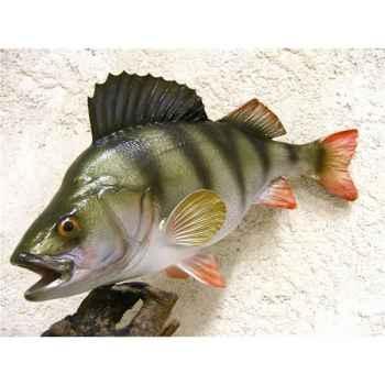Trophée poisson d\'eau douce Cap Vert Perche -TRDF08