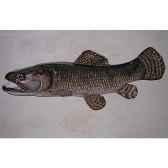 trophee poisson d eau douce tropicale cap vert aimara tr017