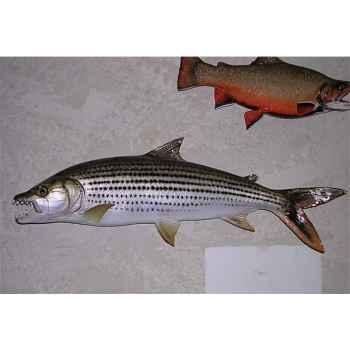 Trophée poisson d\'eau douce tropicale Cap Vert Poisson tigre -TR018