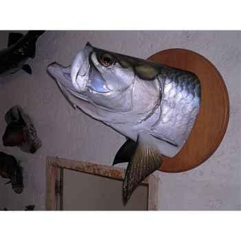 Trophée poisson d\'eau douce tropicale Cap Vert Tarpon tête -TR019
