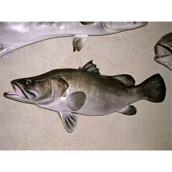 Trophée poisson d\'eau douce tropicale Cap Vert Perche du Nil -TR020