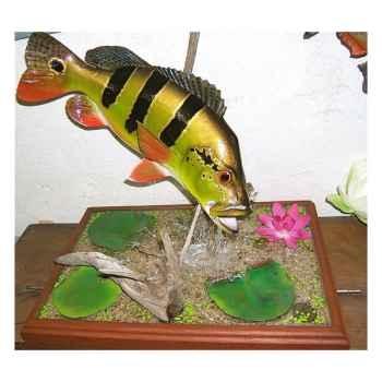 Trophée poisson d\'eau douce tropicale Cap Vert Peacock bass -TR022