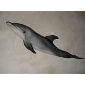 trophee mammifere marin cap vert grand dauphin tr026