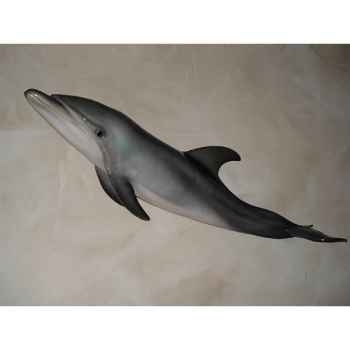 Trophée mammifère marin Cap Vert Grand dauphin -TR026