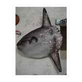 trophee mammifere marin cap vert poisson lune tr028