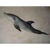 trophee mammifere marin cap vert grand dauphin trdf26