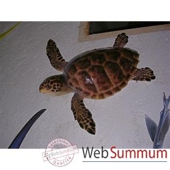 Trophée mammifère marin Cap Vert Tortue carette -TRDF33