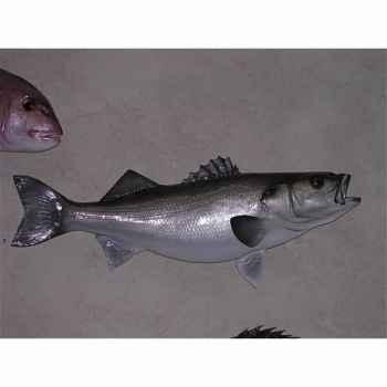 Trophée poisson des mers atlantique méditerranée et nord Cap Vert Bar -TR034