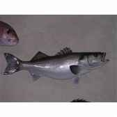 trophee poisson des mers atlantique mediterranee et nord cap vert bar tr035