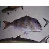 trophee poisson des mers atlantique mediterranee et nord cap vert denti tr038