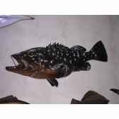 trophee poisson des mers atlantique mediterranee et nord cap vert merou tr042