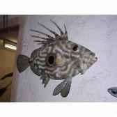 trophee poisson des mers atlantique mediterranee et nord cap vert saint pierre tr045