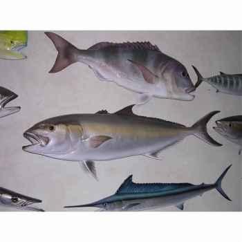 Trophée poisson des mers atlantique méditerranée et nord Cap Vert Sériole -TR047