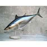 trophee poisson des mers atlantique mediterranee et nord cap vert thon rouge tr050