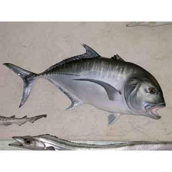 Trophée poisson des mers tropicales Cap Vert Carangue ignobilis -TR051