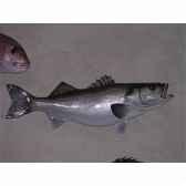 trophee poisson des mers atlantique mediterranee et nord cap vert bar trdf35
