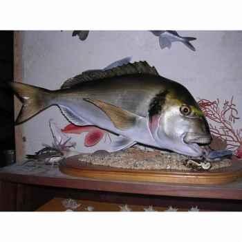 Trophée poisson des mers atlantique méditerranée et nord Cap Vert Dorade royale -TRDF40