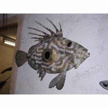 Trophée poisson des mers atlantique méditerranée et nord Cap Vert Saint-Pierre -TRDF45