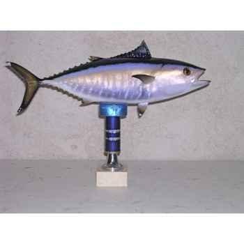 Trophée poisson des mers atlantique méditerranée et nord Cap Vert Thon rouge bébé -TRDF51