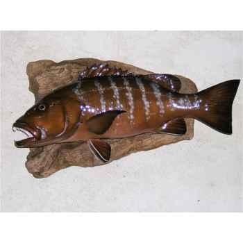 Trophée poisson des mers tropicales Cap Vert Carpe rouge -TR052