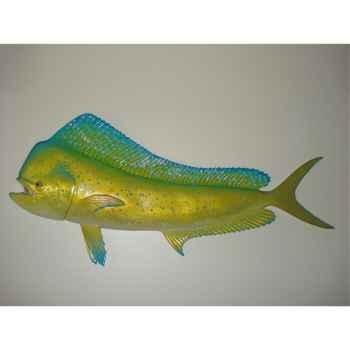 Trophée poisson des mers tropicales Cap Vert Coryphène -TR053