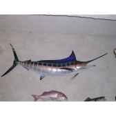 trophee poisson des mers tropicales cap vert marlin bleu tr056