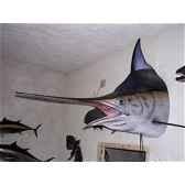 trophee poisson des mers tropicales cap vert marlin noir tete tr064