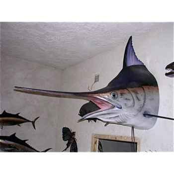 Trophée poisson des mers tropicales Cap Vert Marlin noir tête -TR064