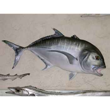 Trophée poisson des mers tropicales Cap Vert Carangue ignobilis -TRDF52