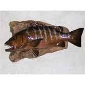 trophee poisson des mers tropicales cap vert carpe rouge trdf53