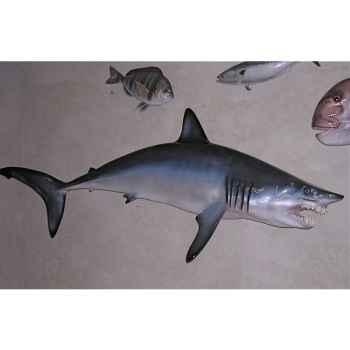 Trophée poisson des mers tropicales Cap Vert Requin mako -TRDF66