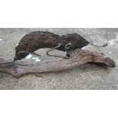 cameleon sur bois flotte terre sauvage do08