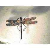 libellule pour mur en metarecycle terre sauvage wd01