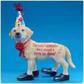 figurine chien labrador happy birthday hp16931