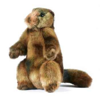 Peluche Marmotte Anima-5498
