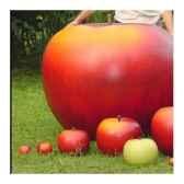 mini pomme rouge classique diam 5cm cores da terra
