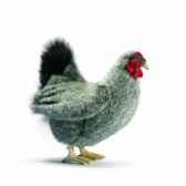 peluche poule grise 23cm anima 5622